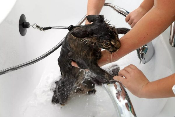 Кот под душем и руки