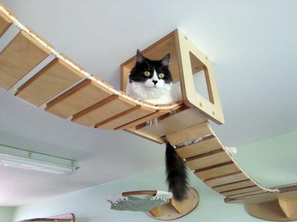 Кот на подвесной конструкции