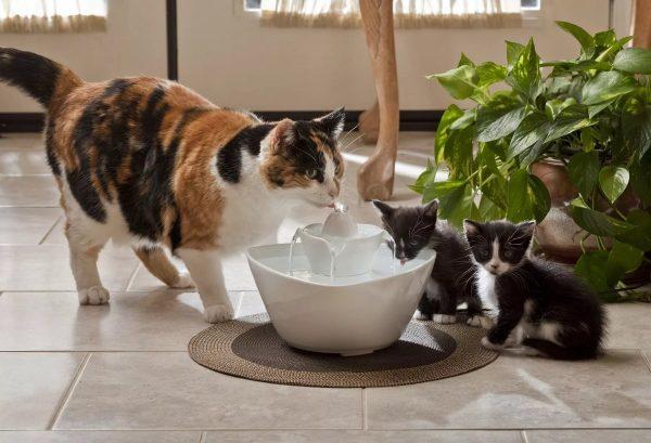 Кошка и котята у поилки