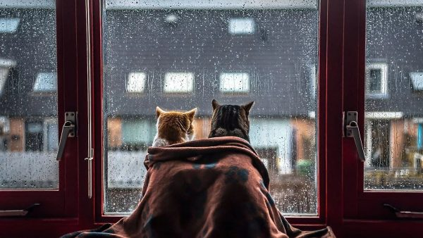 Котики у окна