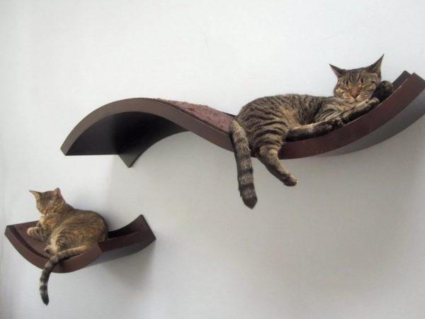 Кошки на полках