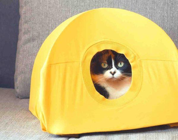 Кот в палатке