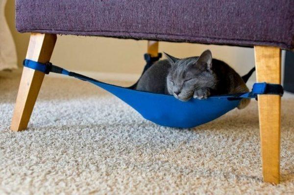 Кот в самодельном гамаке