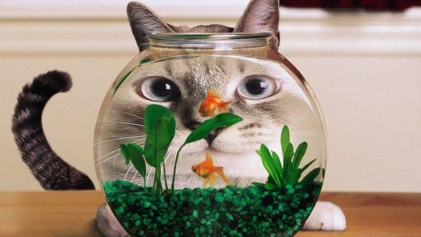 Кот за аквариумом