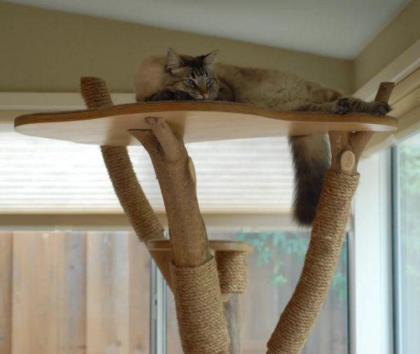Кот на дереве для лазанья в квартире