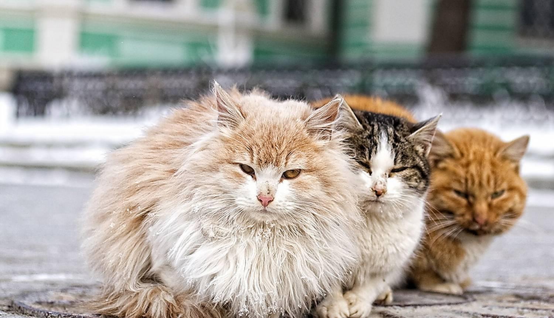 фото с бездомными кошками раны
