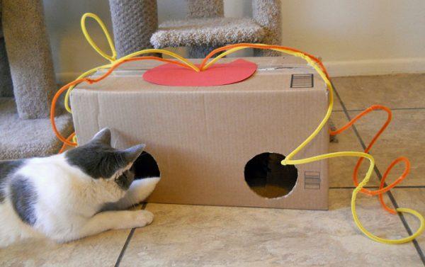 Коробка-игрушка и кот