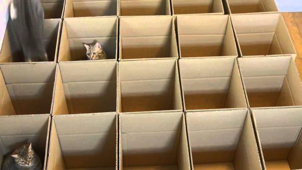 Игрушка из коробок