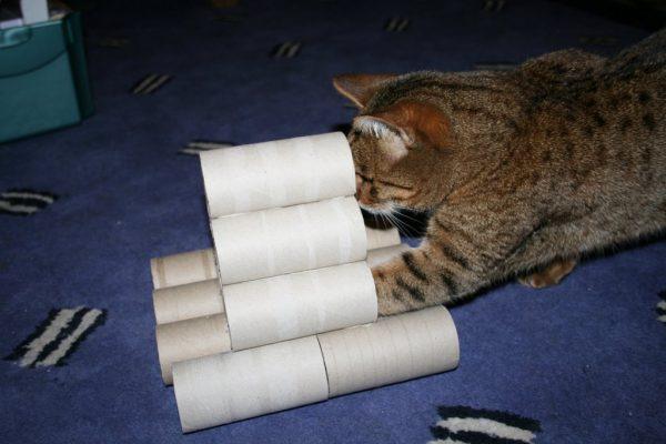 Котик и втулки от туалетной бумаги