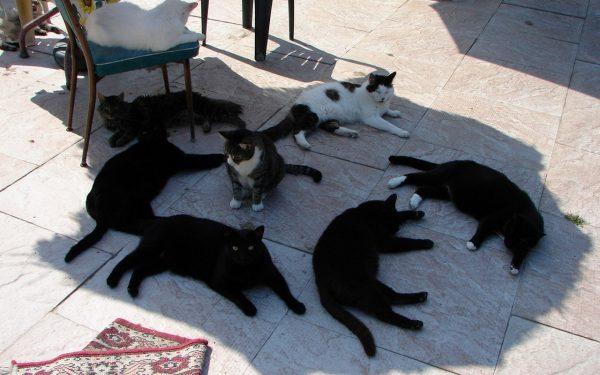 Кошки в тени