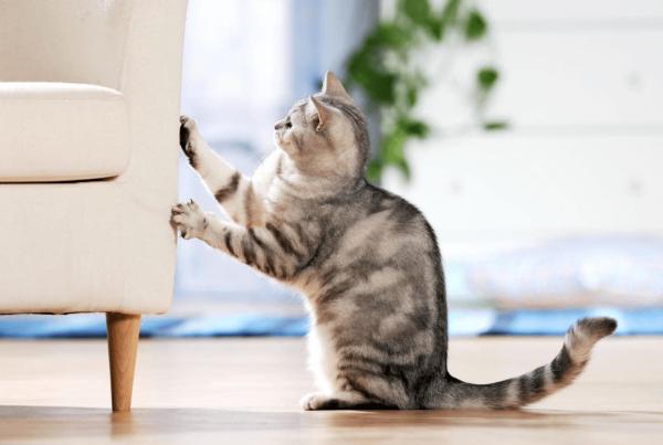 Кот царапает кресло