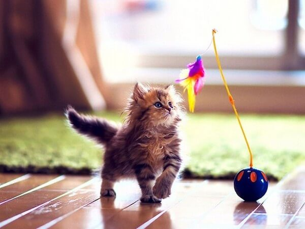 Котёнок и игрушка