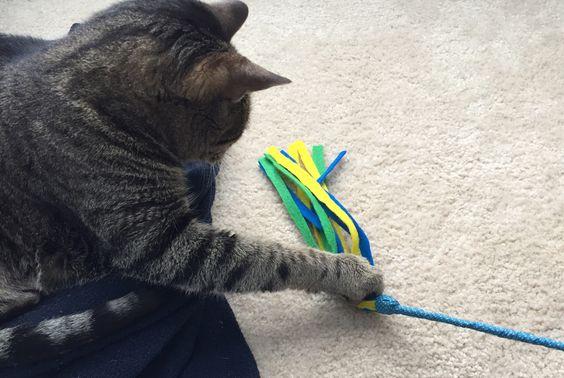 Дразнилка на палочке и кот