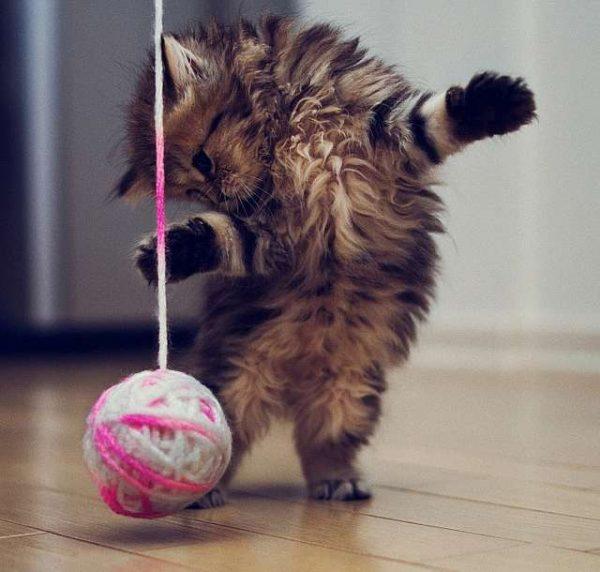 Котёнок играет клубком