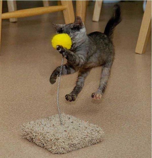 Котёнок и игрушка на пружинке