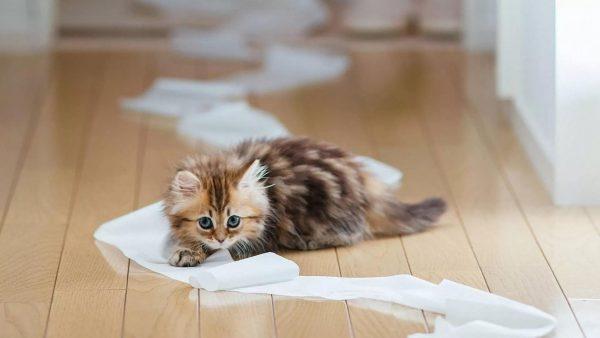 Котёнок и туалетная бумага