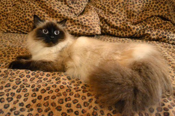 Маскарадная кошка на пятнистом оранжевом покрывале