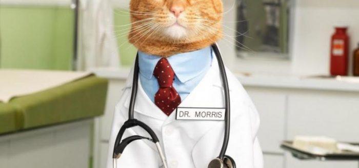 Как дать таблетку кошке