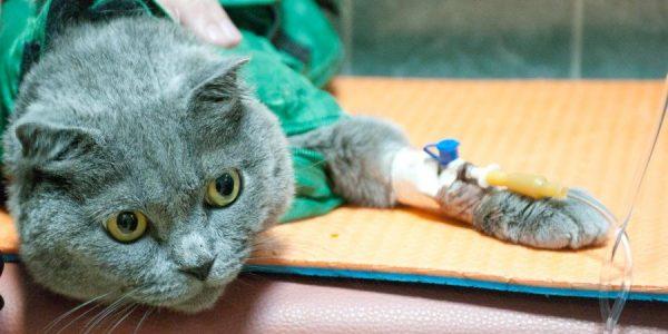 Когда следует использовать памперсы для котов