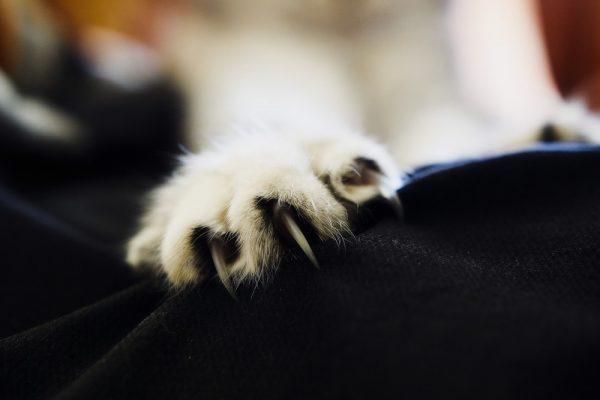 Кошки часто точат когти