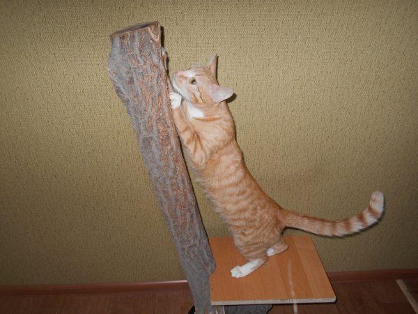 Когтеточка из дерева