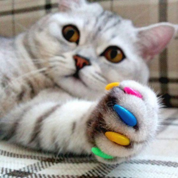 разноцветные колпачки на когтях британской короткошерстной кошки