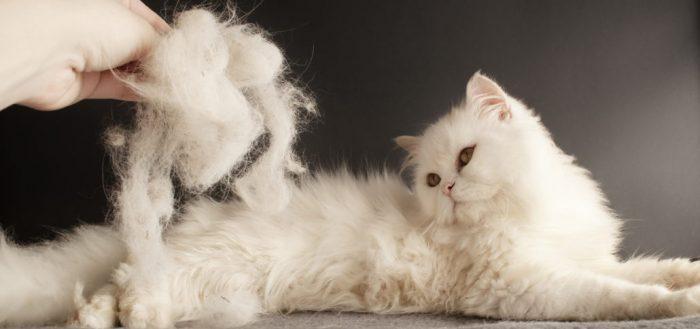 Колтунорез для кота