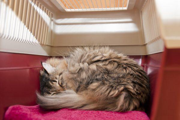 Кот свернулся клубочком в переноске