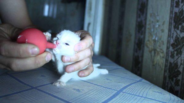 Кормление котёнка из резиновой груши