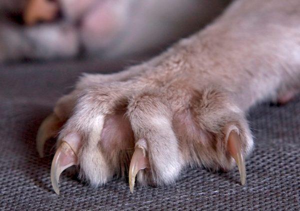 Кошачьи когти