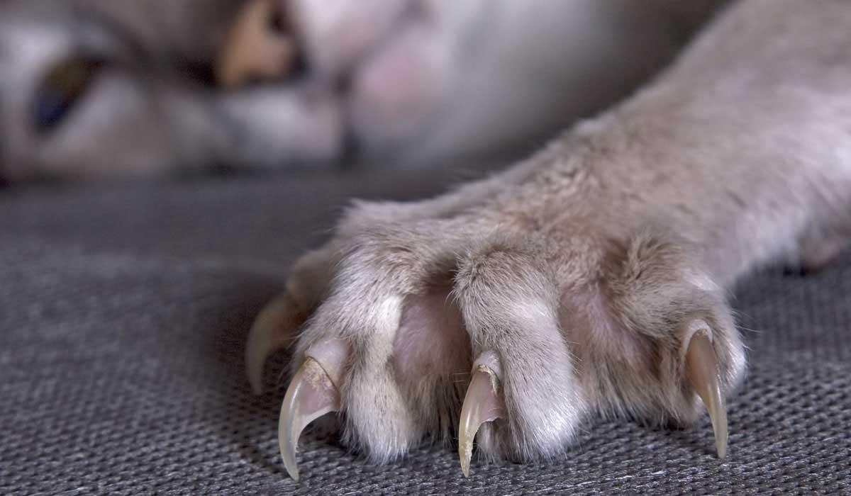 Кот без когтей: операция по удалению и альтернативные варианты