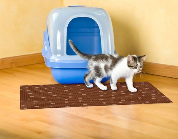 Кошачий туалет-домик и трёхцветный котёнок на коврике