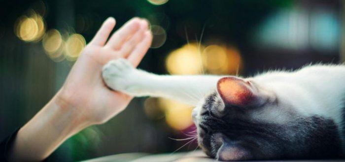 Кошачья лапа на руке