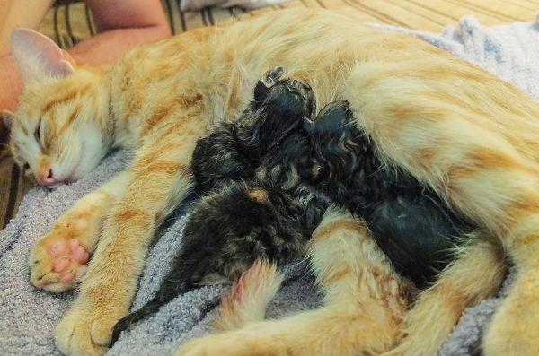 Кошечка с потомством