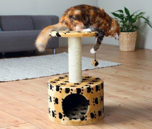 Кошка сидит на своём домике