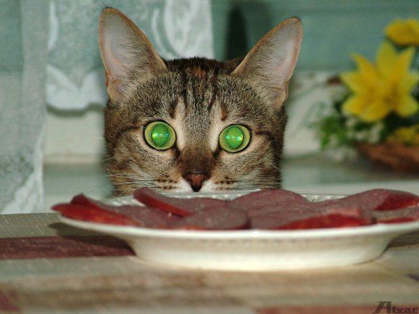 кошка смотрит на колбасу