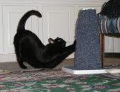 кошка и когтеточка