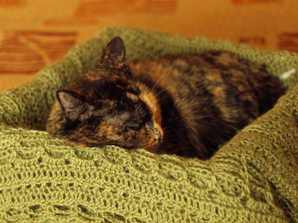 Кошка и уютное спальное место