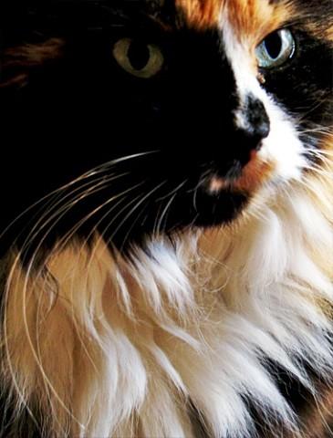 Кошка крупным планом