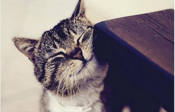 Кошка трётся об угол стула