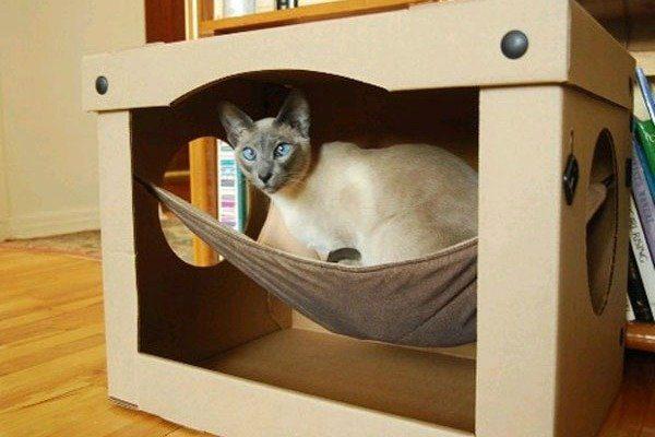 Кошка на гамаке в домике