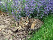 Кошка на клумбе