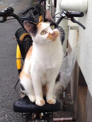 Кошка на велосипеде