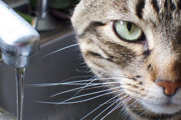 Кошка рядом с открытым краном