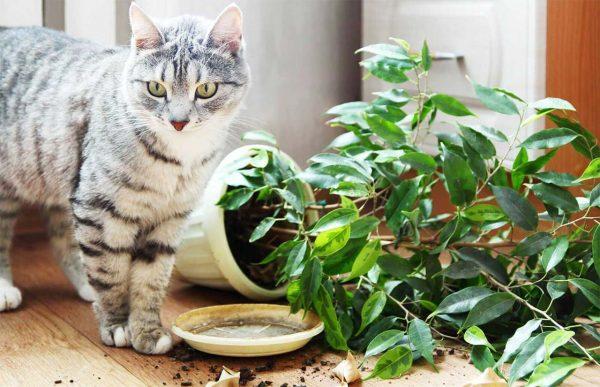 Кошка стоит рядом с упавшим растением