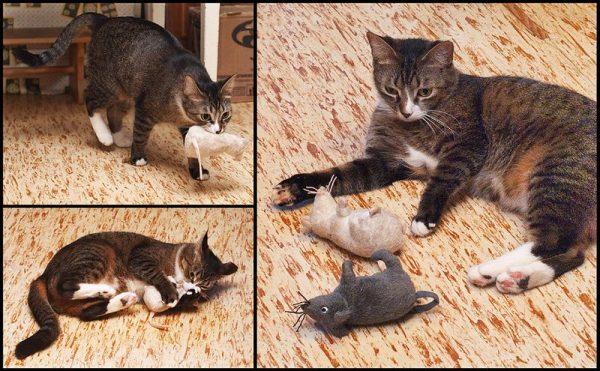 Кошка с игрушками