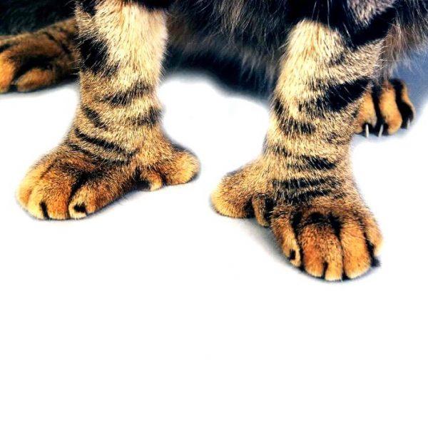 лапы кошки с полидактилией