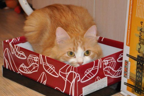 кошка сидит в засаде в коробке
