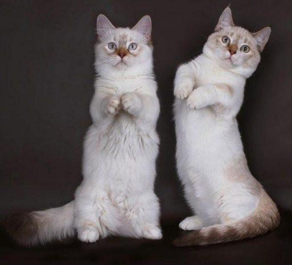 Два манчкина
