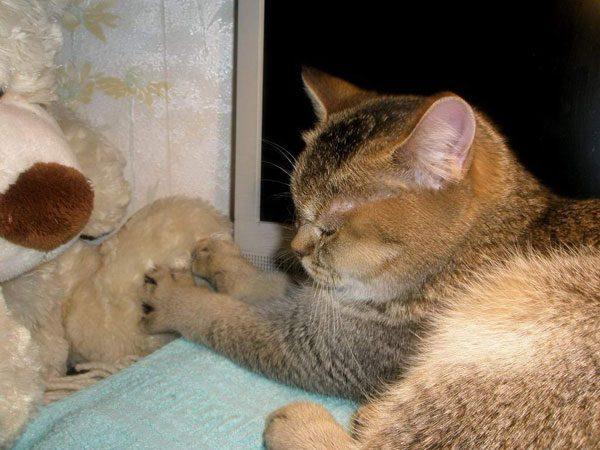 Кошка топчет игрушку